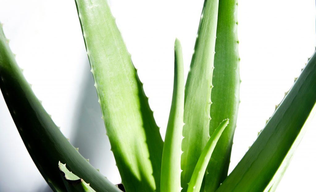 5 Reasons You Should Be Using Skincare Products With Aloe Vera